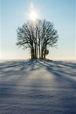 Preview iPhone wallpaper Winter, trees, sunshine, shadow, snow