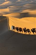 Deserto de Xinjiang Kumtag, camelo, China