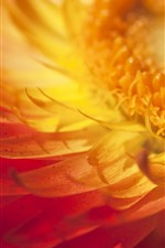 Preview iPhone wallpaper Yellow flower macro photography, petals, pistil