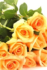 Yellow roses, white background