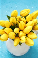 Yellow tulips, blue background