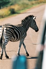 Preview iPhone wallpaper Zebra crossing the road