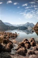 Áustria, Altaussee, lago, montanhas, plantas, sol