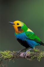 Preview iPhone wallpaper Beautiful bird, colorful feathers