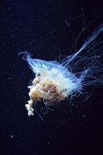 Bela água-viva, animal do mar, debaixo d'água
