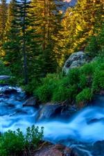 Aperçu iPhone fond d'écranBelle nature, ruisseau, arbres