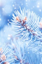 Preview iPhone wallpaper Beautiful spruce twigs, snow, frost