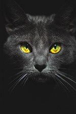 Black cat, face, yellow eyes, darkness