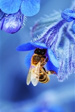 Preview iPhone wallpaper Blue flowers, bee, macro photography
