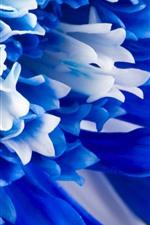 Preview iPhone wallpaper Blue petals flowers close-up