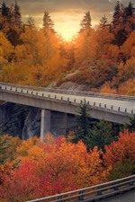 Bridge, road, trees, sunset, autumn