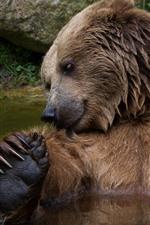 Preview iPhone wallpaper Brown bear bathing in water, wildlife