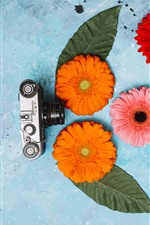 Preview iPhone wallpaper Camera and gerbera flowers