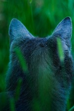 Cat back view, ears, grass