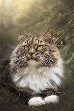 Preview iPhone wallpaper Cat in the nature, hazy
