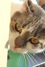 Preview iPhone wallpaper Cat, look, face, ears, cute pet