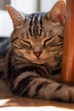 Preview iPhone wallpaper Cat sleeping, room, floor