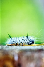 Preview iPhone wallpaper Caterpillars macro photography