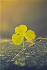 Preview iPhone wallpaper Clover, leaves, fog, sunshine