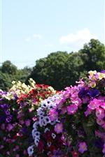 Colorful flowers, park, city
