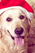 Preview iPhone wallpaper Cute dog, look, Christmas hat