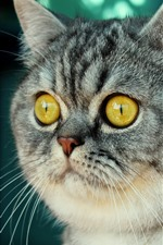 Preview iPhone wallpaper Cute gray striped cat, face, nose, yellow eyes