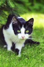 Cute kitten walking, grass, green
