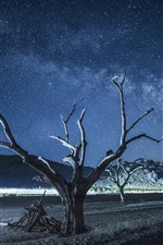Preview iPhone wallpaper Dry trees, beach, night, starry, beautiful sky