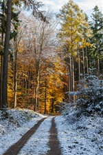 Forest, trees, path, snow, winter