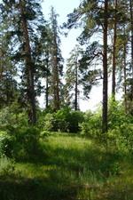 미리보기 iPhone 배경 화면 숲, 나무, 그림자