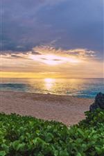 Preview iPhone wallpaper France, Indian Ocean, sea, beach, palm trees, plants, sunset