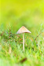 Preview iPhone wallpaper Fresh nature, grass, mushroom, dew