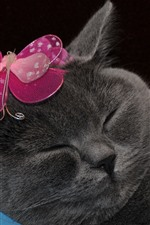 Preview iPhone wallpaper Funny gray cat, butterfly decoration
