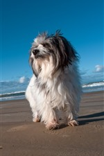 Preview iPhone wallpaper Furry puppy, beach, sea
