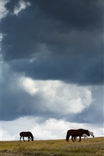 Preview iPhone wallpaper Grassland, horses, clouds, sky