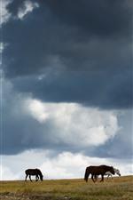 Grassland, horses, clouds, sky