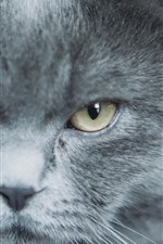 Preview iPhone wallpaper Gray cat, face, eyes, look
