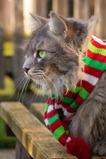 Preview iPhone wallpaper Gray cat, green eyes, scarf
