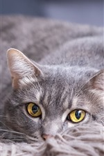 Preview iPhone wallpaper Gray cat, yellow eyes, rest
