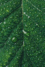 Green leaf close-up, water droplets, texture