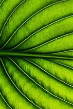 Preview iPhone wallpaper Green leaf, stripes