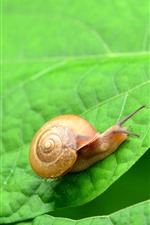Preview iPhone wallpaper Green leaves, snail, insect