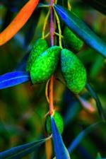 Green olives, leaves