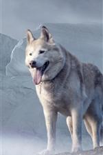 Husky dog, glacier
