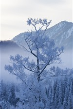 Kanas in the winter, trees, snow, beautiful nature landscape, China