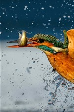 Kingfisher catch a fish, water splash