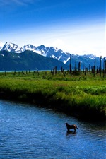 Preview iPhone wallpaper Lake, mountains, dog