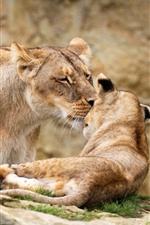 Leoa e filhote de leão