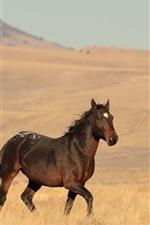 Lonely horse, grassland