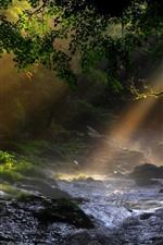 Preview iPhone wallpaper Nature, trees, creek, sun rays